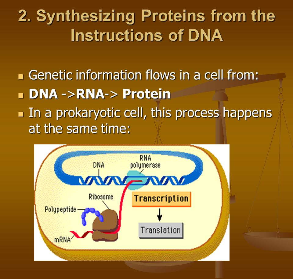 2. Synthesizing Proteins from the Instructions of DNA