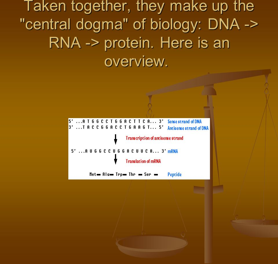 Taken together, they make up the central dogma of biology: DNA -> RNA -> protein.