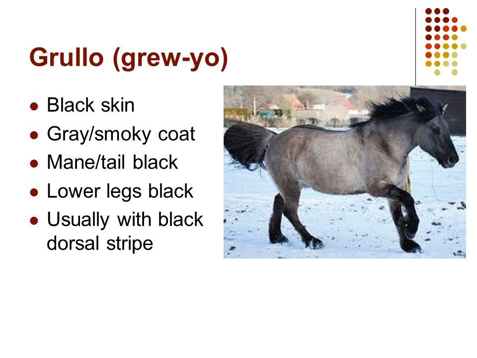 Grullo (grew-yo) Black skin Gray/smoky coat Mane/tail black