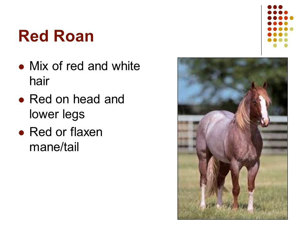 Red Roan Mix of red and white hair Red on head and lower legs