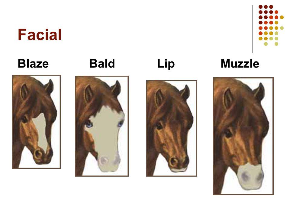 Facial Blaze Bald Lip Muzzle