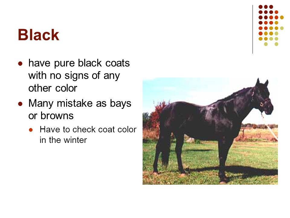 Black have pure black coats with no signs of any other color
