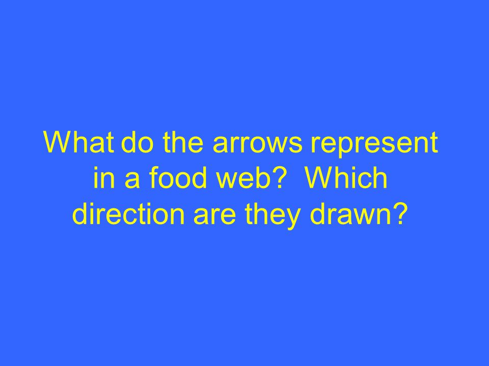 What do the arrows represent in a food web