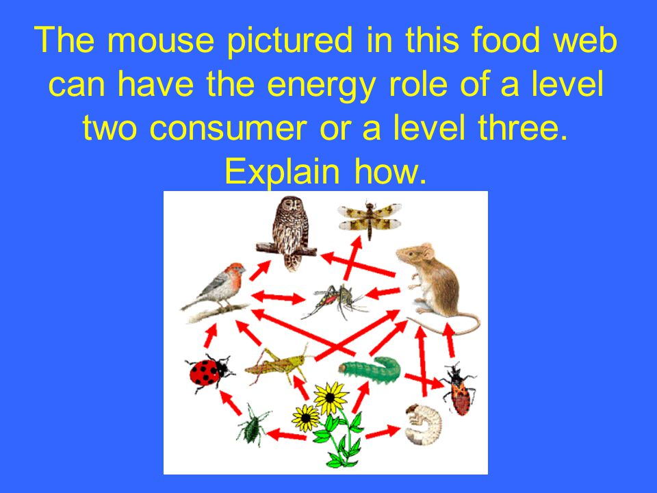 The mouse pictured in this food web can have the energy role of a level two consumer or a level three.