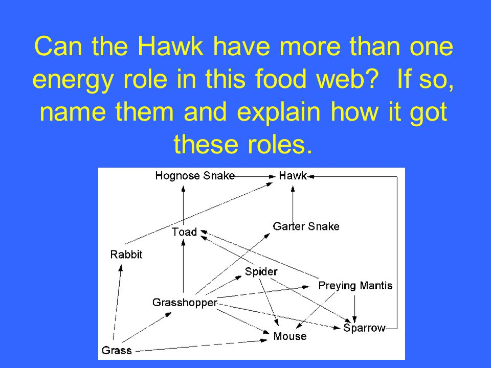 Can the Hawk have more than one energy role in this food web