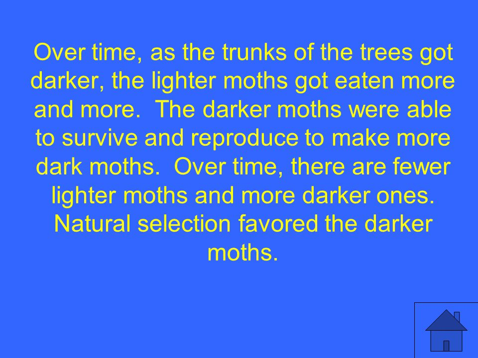 Over time, as the trunks of the trees got darker, the lighter moths got eaten more and more.