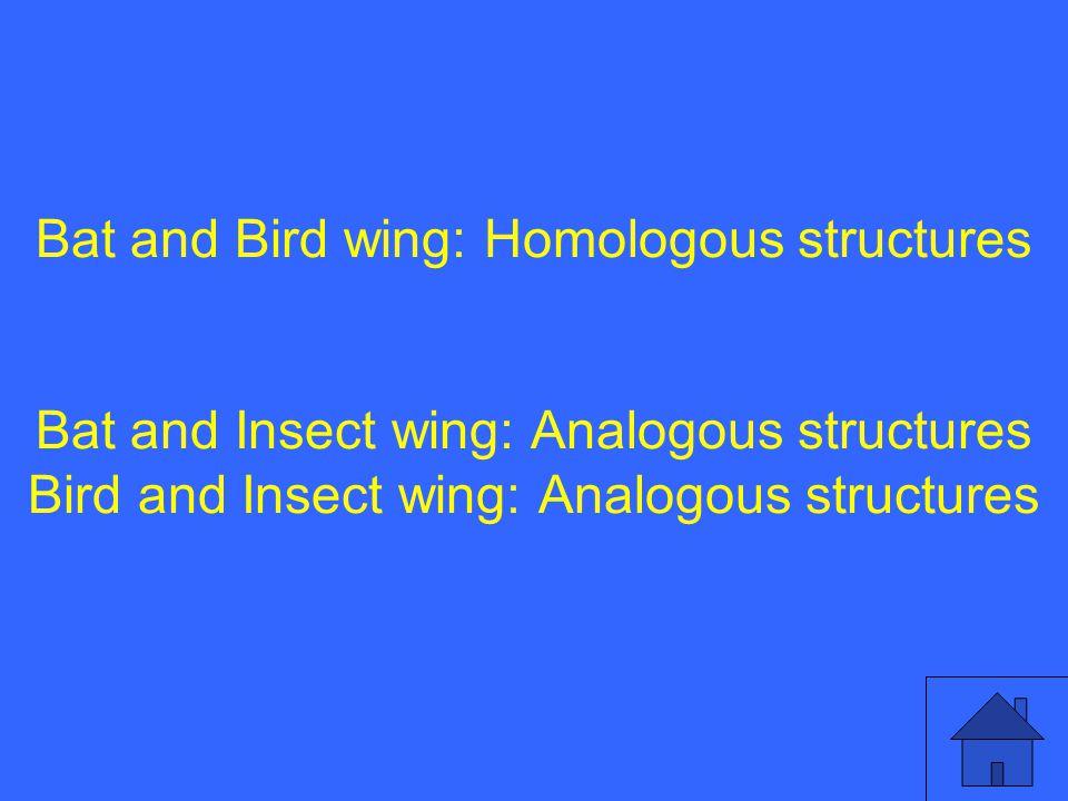 Bat and Bird wing: Homologous structures Bat and Insect wing: Analogous structures Bird and Insect wing: Analogous structures