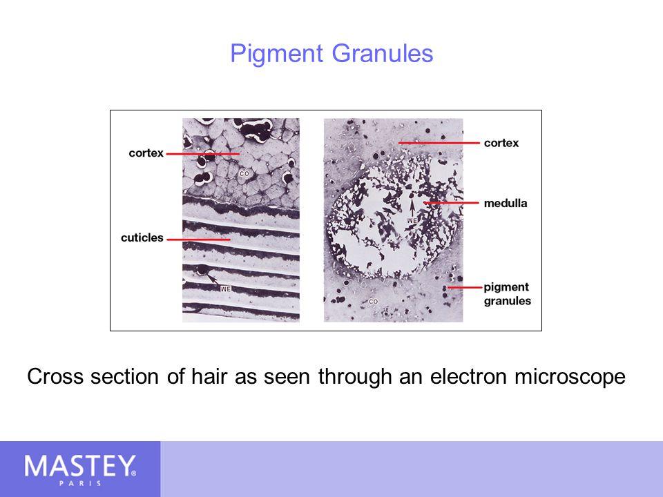 Cross section of hair as seen through an electron microscope
