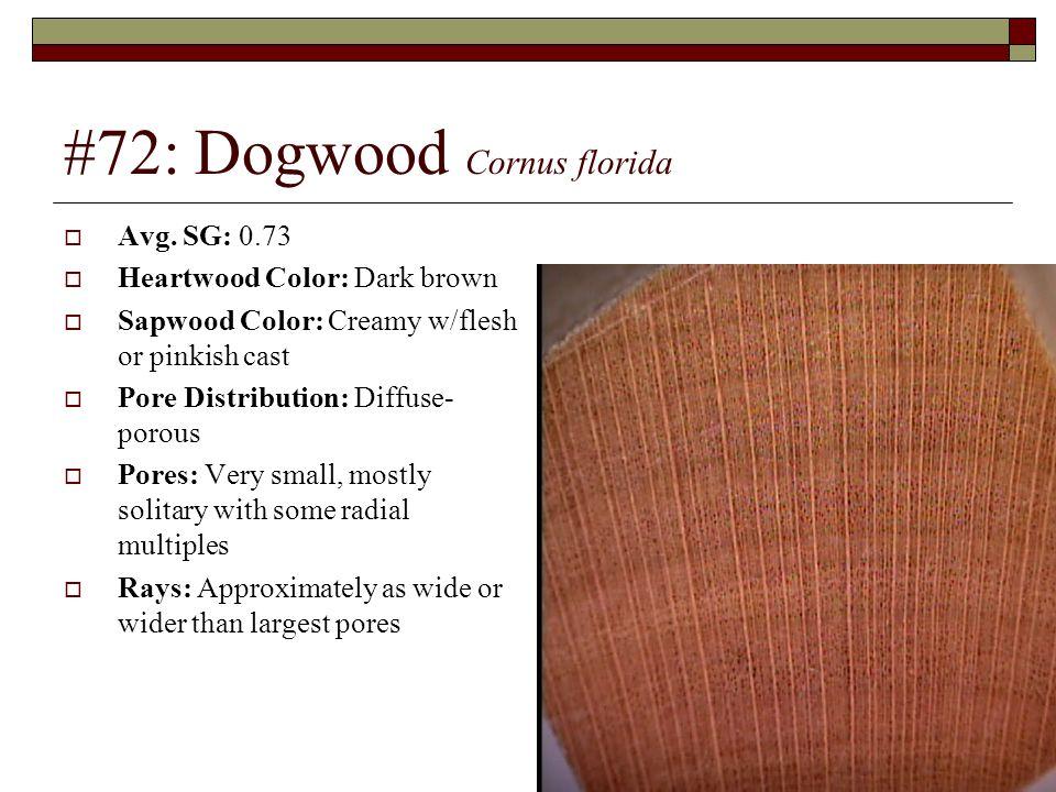 #72: Dogwood Cornus florida