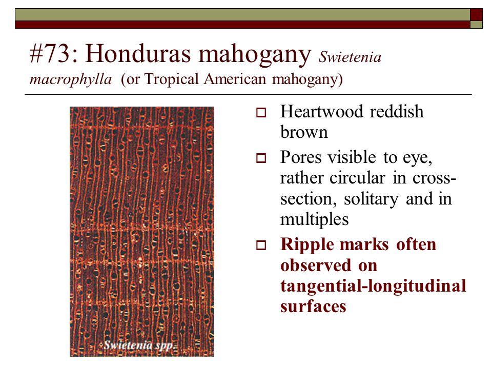 #73: Honduras mahogany Swietenia macrophylla (or Tropical American mahogany)