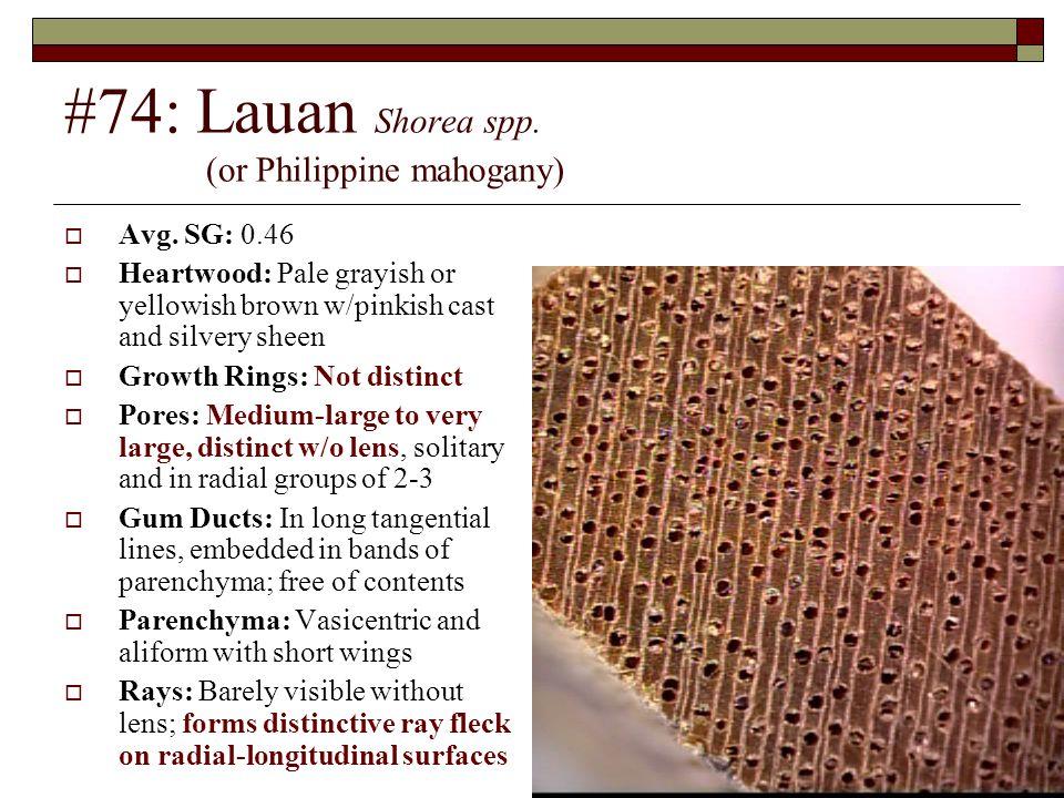 #74: Lauan Shorea spp. (or Philippine mahogany)