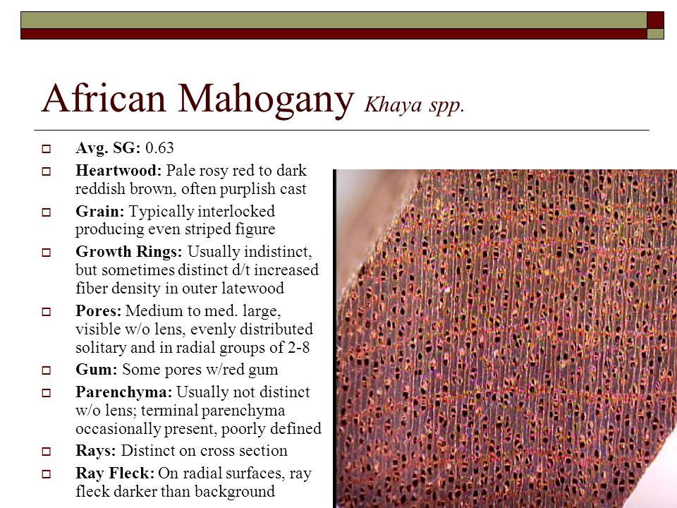 African Mahogany Khaya spp.