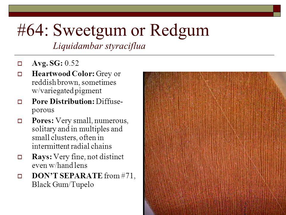 #64: Sweetgum or Redgum Liquidambar styraciflua