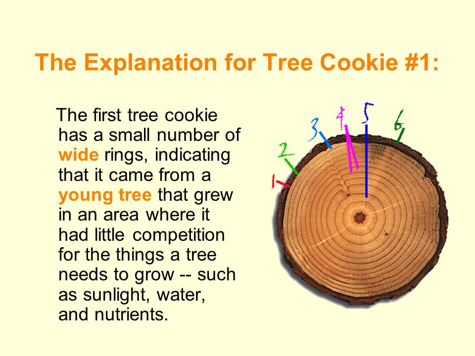 The Explanation for Tree Cookie #1: