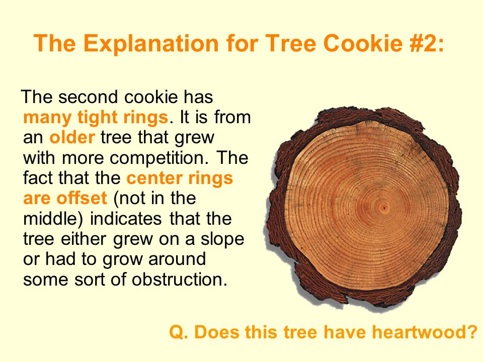 The Explanation for Tree Cookie #2: