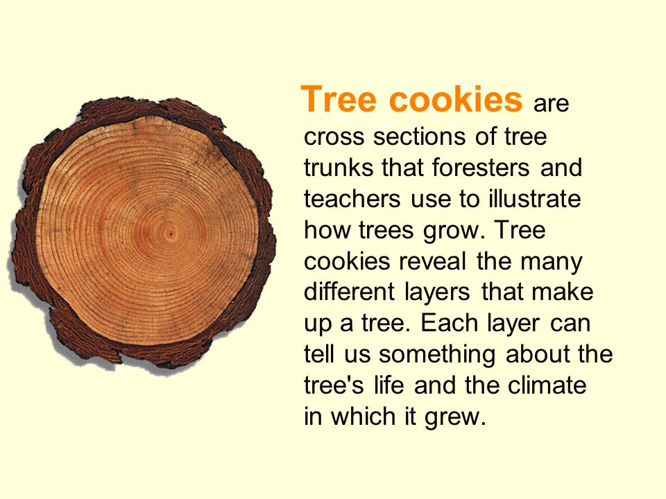 Tree cookies are cross sections of tree trunks that foresters and teachers use to illustrate how trees grow.