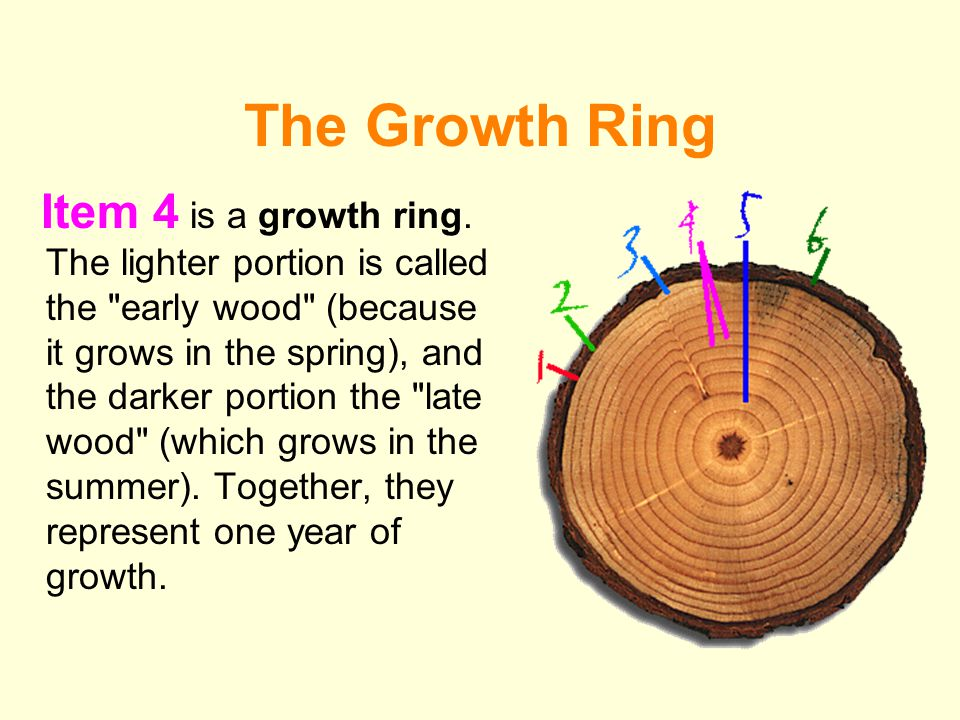 The Growth Ring