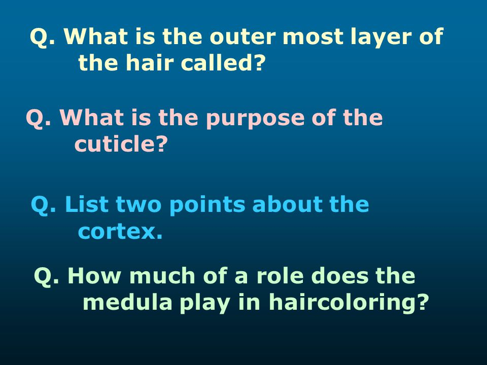 Q. List two points about the cortex.