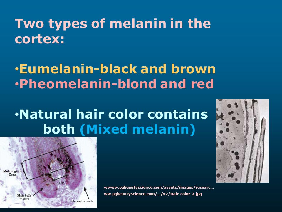 Two types of melanin in the cortex: