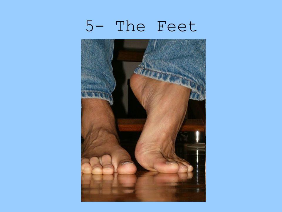 5- The Feet