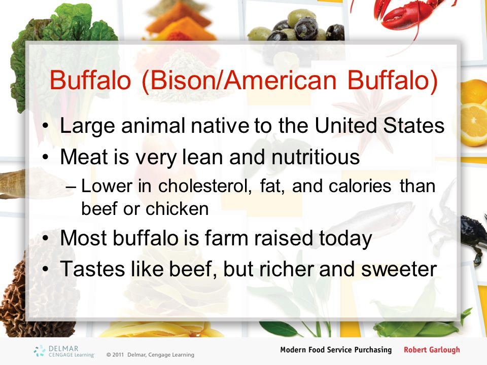 Buffalo (Bison/American Buffalo)