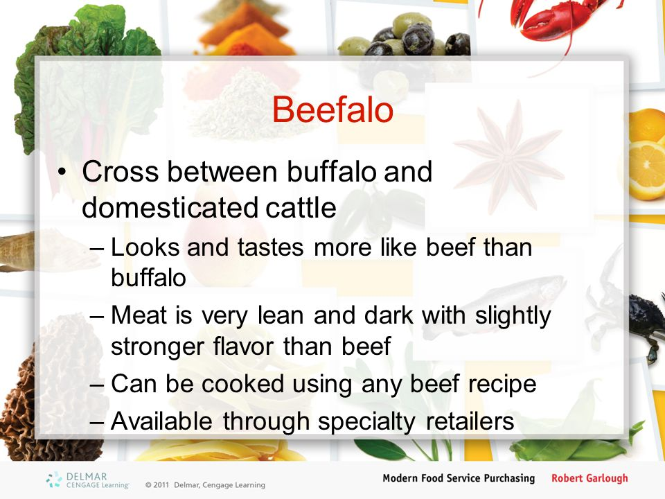 Beefalo Cross between buffalo and domesticated cattle