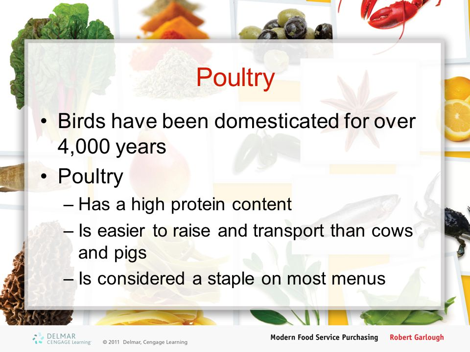 Poultry Birds have been domesticated for over 4,000 years Poultry