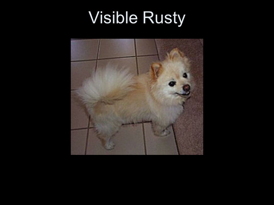 Visible Rusty