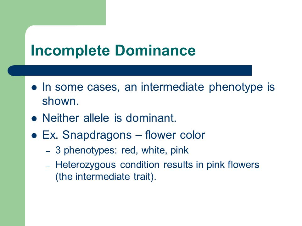 Incomplete Dominance In some cases, an intermediate phenotype is shown. Neither allele is dominant.