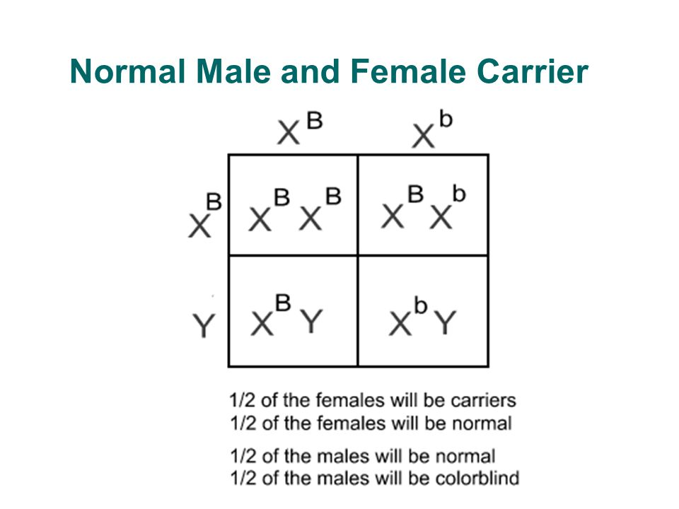 Normal Male and Female Carrier
