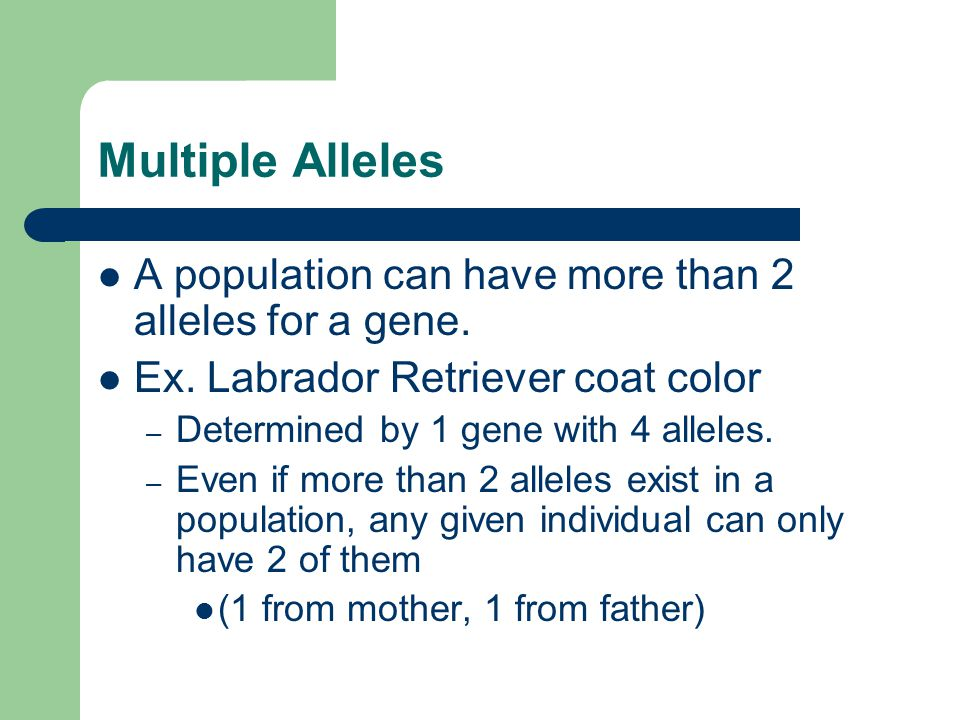 Multiple Alleles A population can have more than 2 alleles for a gene.