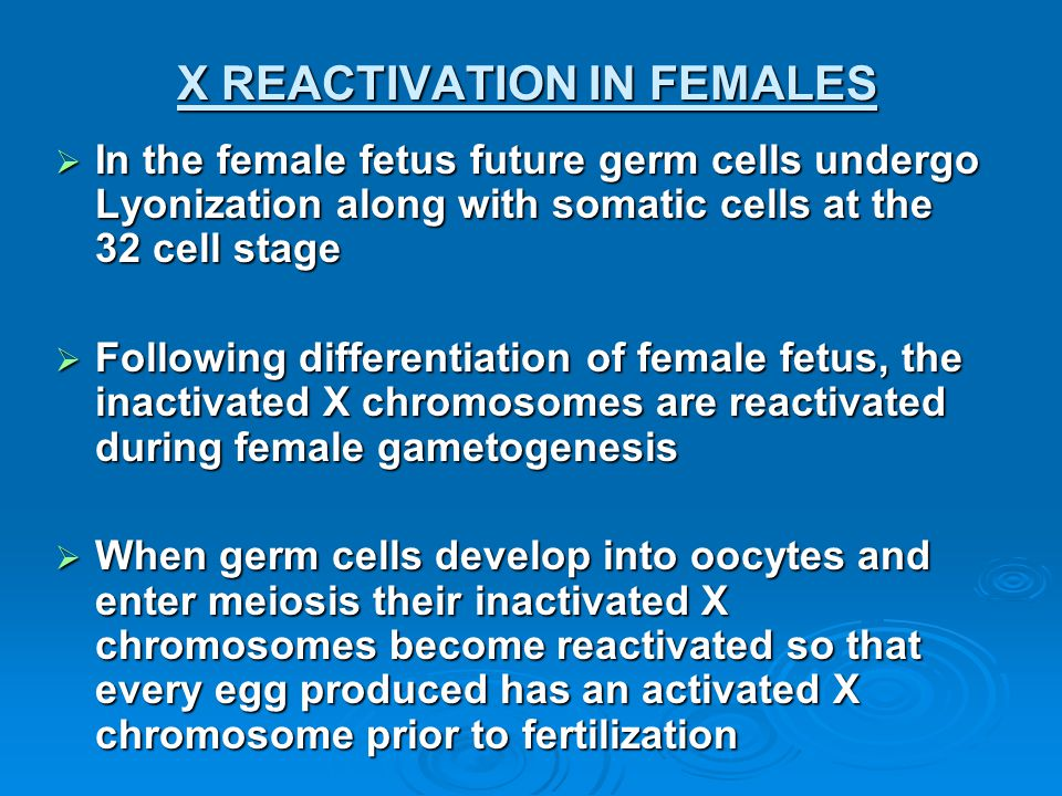 X REACTIVATION IN FEMALES