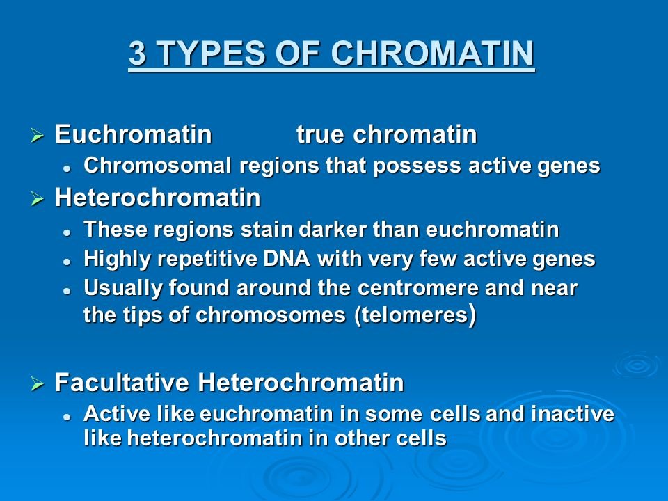 3 TYPES OF CHROMATIN Euchromatin true chromatin Heterochromatin