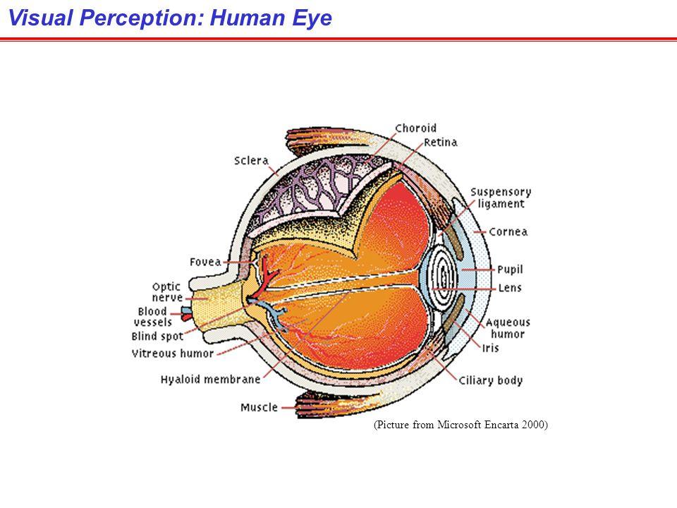 Visual Perception: Human Eye