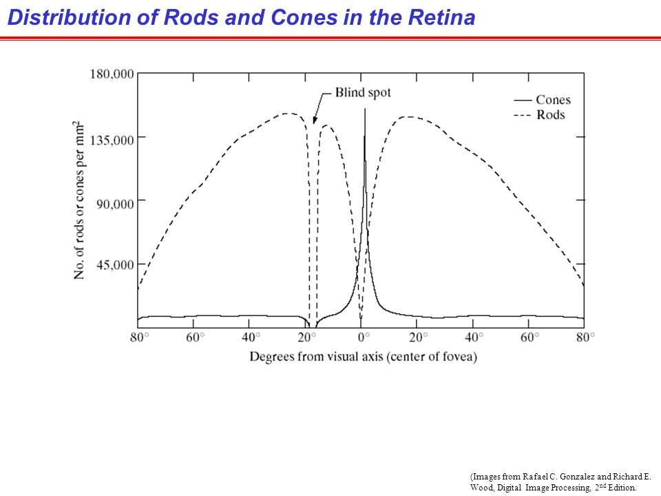 Distribution of Rods and Cones in the Retina