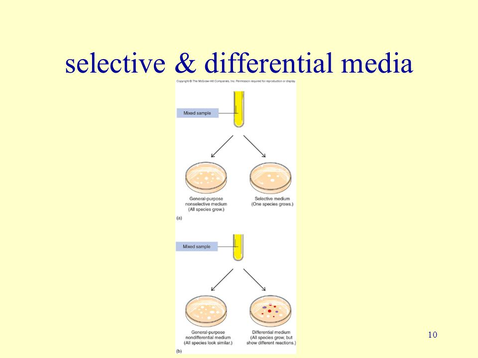 selective & differential media