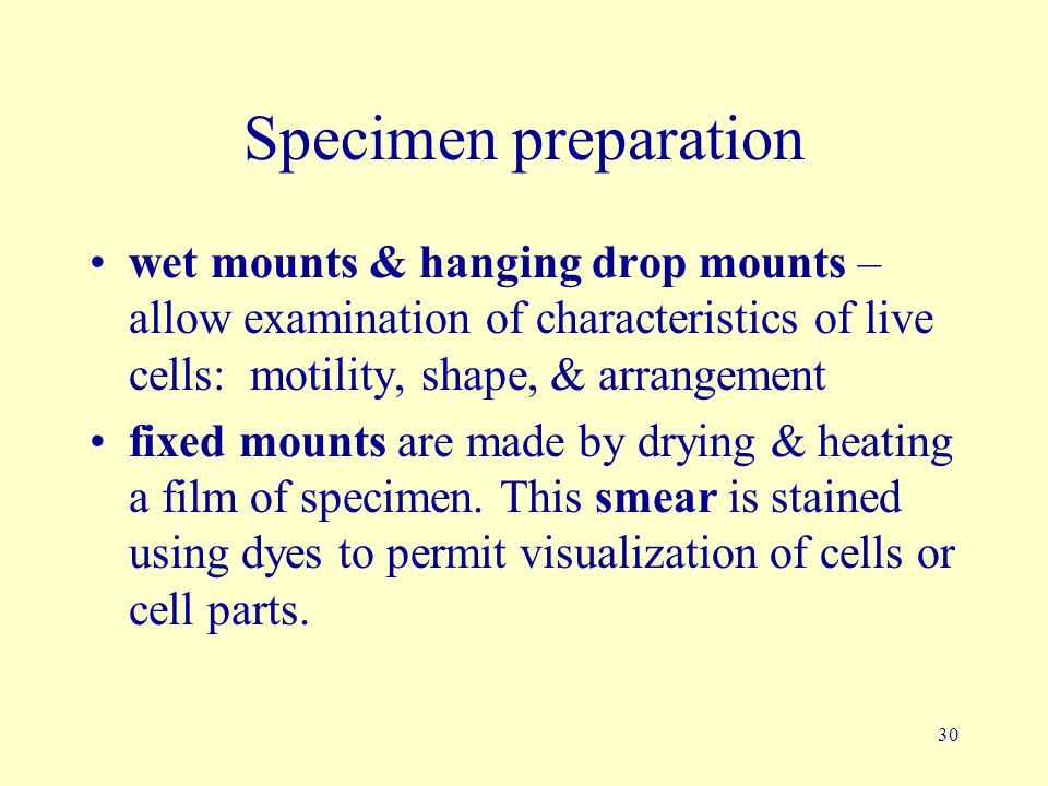 Specimen preparation wet mounts & hanging drop mounts – allow examination of characteristics of live cells: motility, shape, & arrangement.