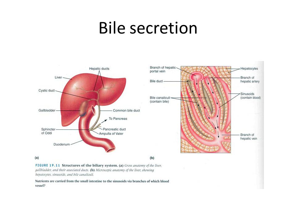 Bile secretion