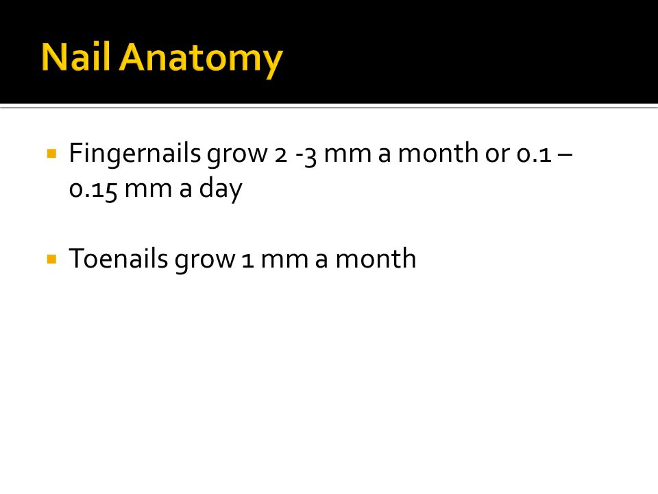 Nail Anatomy Fingernails grow 2 -3 mm a month or 0.1 – 0.15 mm a day