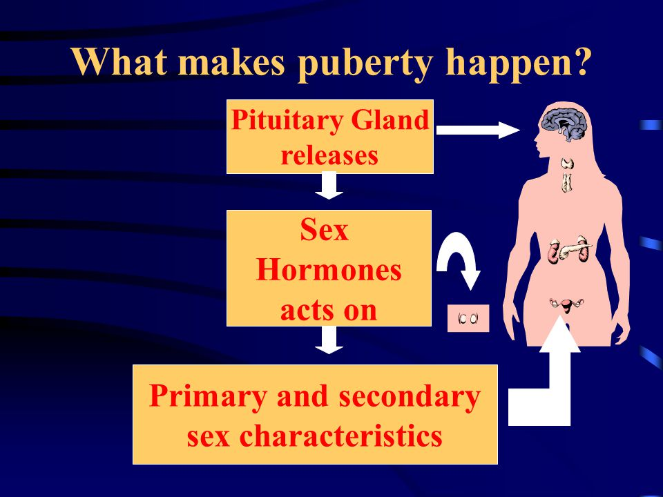 What makes puberty happen