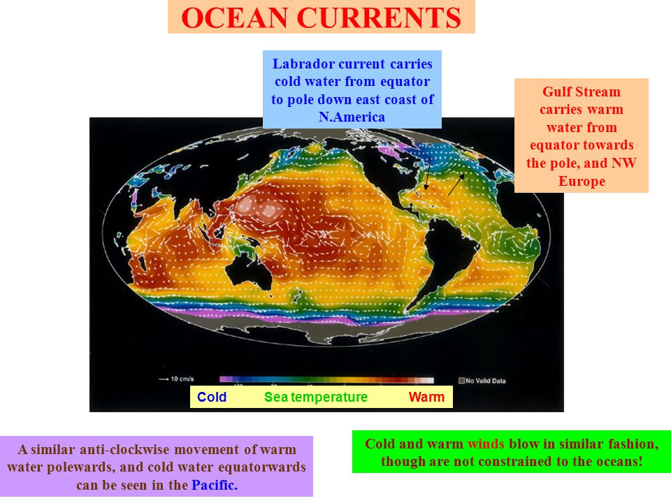 OCEAN CURRENTS Labrador current carries cold water from equator to pole down east coast of N.America.