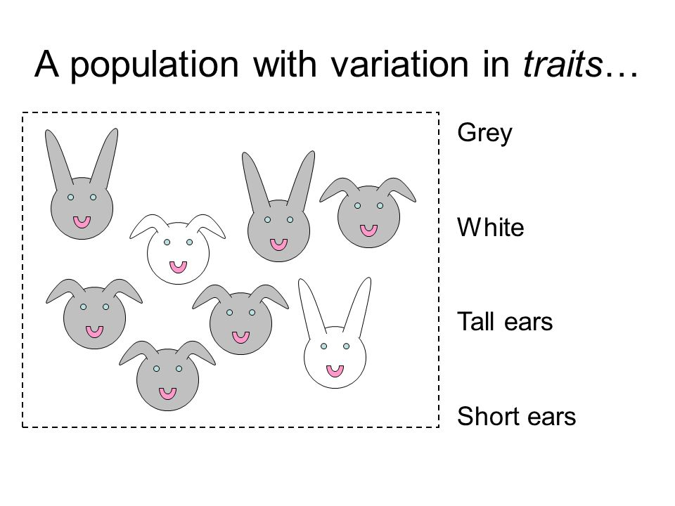 A population with variation in traits…