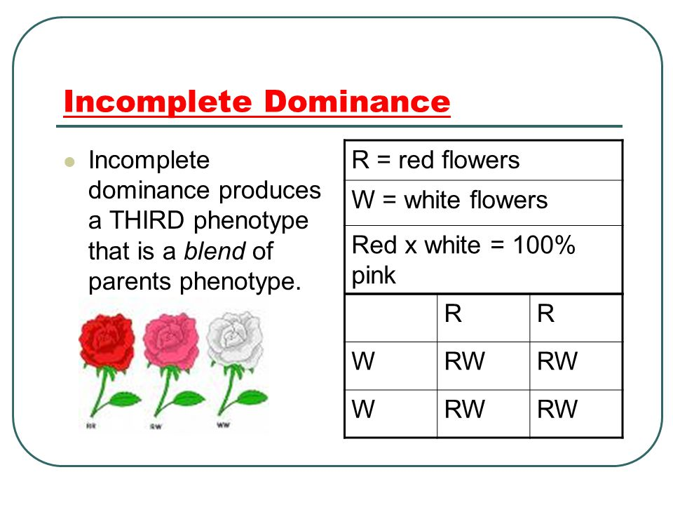 Incomplete Dominance Incomplete dominance produces a THIRD phenotype that is a blend of parents phenotype.