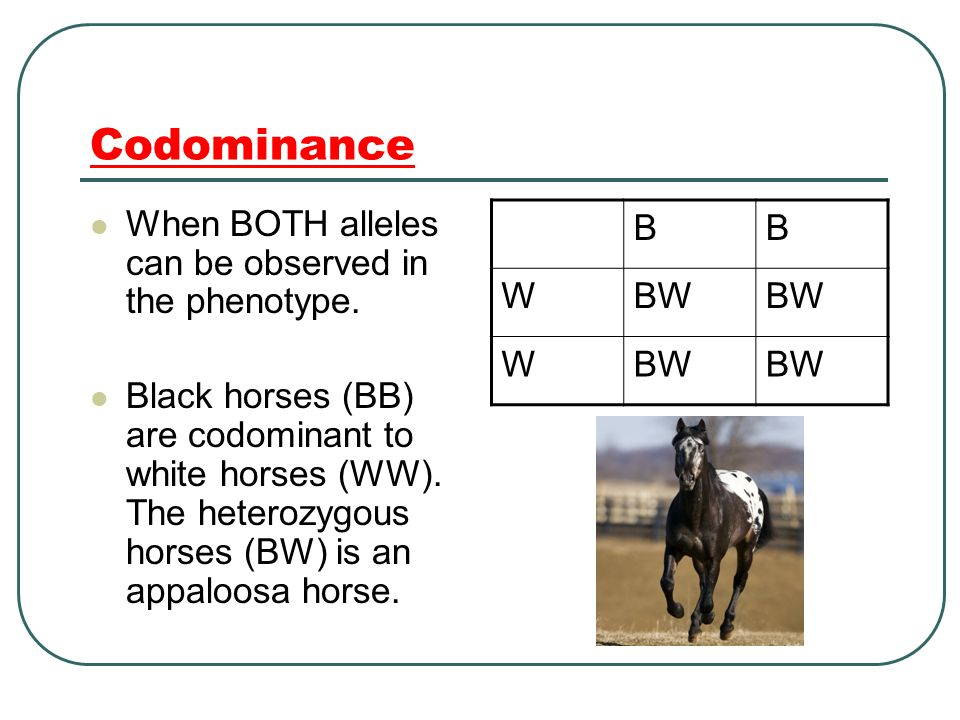 Codominance When BOTH alleles can be observed in the phenotype.