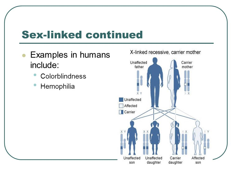 Sex-linked continued Examples in humans include: Colorblindness