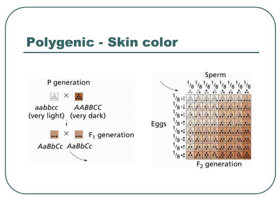 Polygenic - Skin color