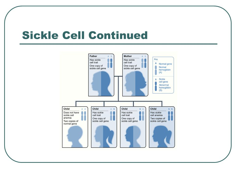 Sickle Cell Continued