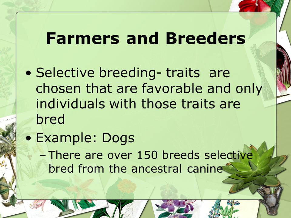 Farmers and Breeders Selective breeding- traits are chosen that are favorable and only individuals with those traits are bred.