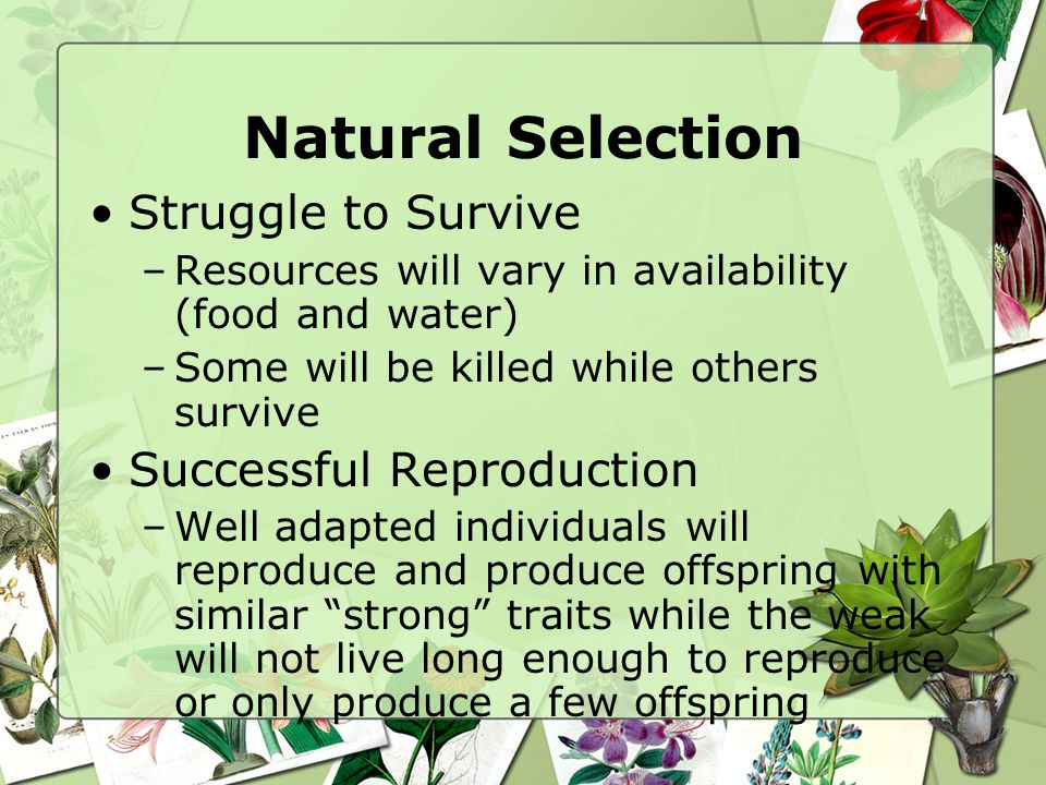 Natural Selection Struggle to Survive Successful Reproduction