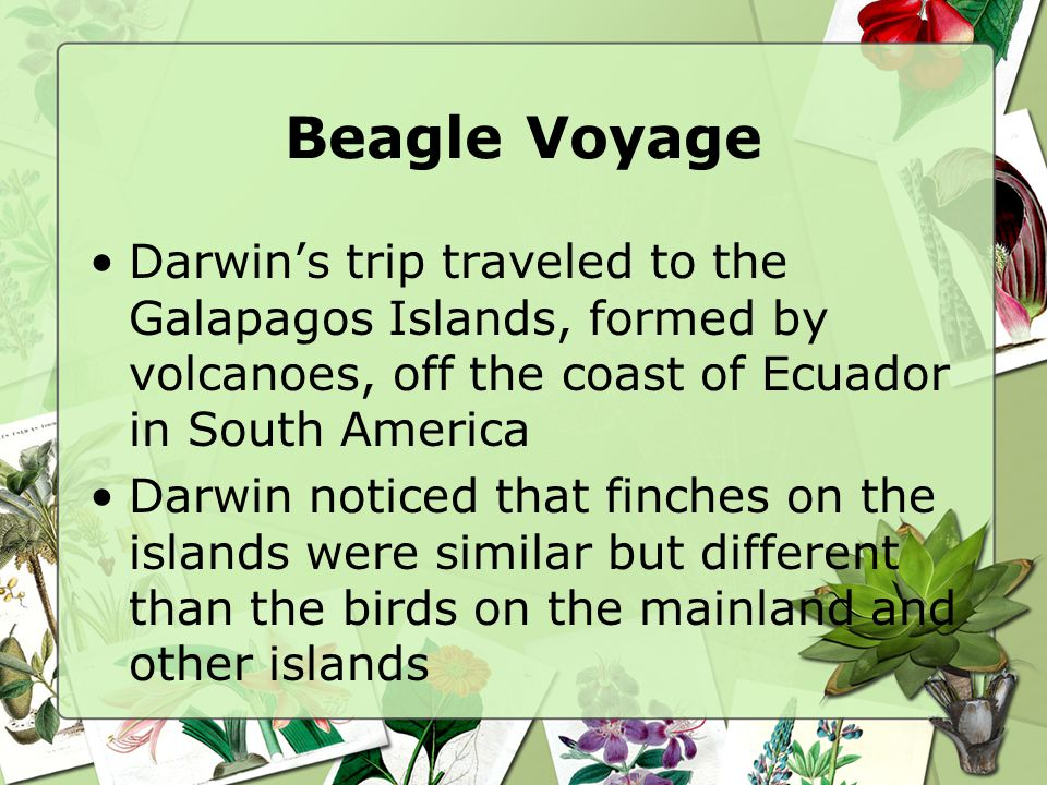 Beagle Voyage Darwin's trip traveled to the Galapagos Islands, formed by volcanoes, off the coast of Ecuador in South America.